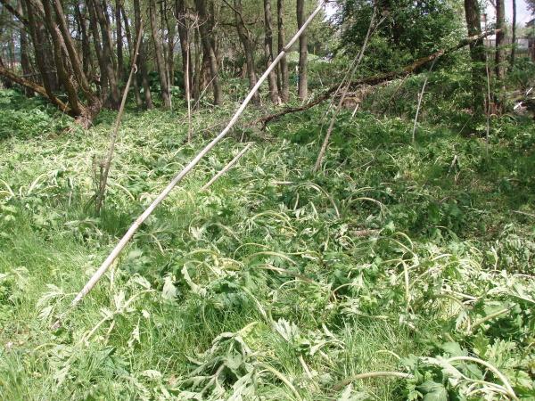 Selektivní-herbicid-2