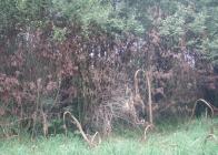 Poškození-stromů-postřikem