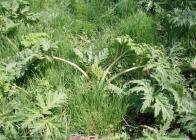 Po-postřiku-selektivním-herbicidem-2.-den