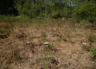 Totální-herbicid-dráha-2