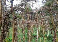 Semenící-porost-1